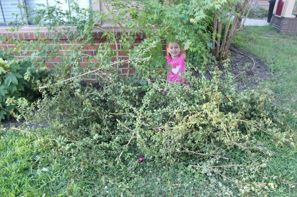 She made a pirate hideout =)  I had just pruned the maple and crepe myrtle and she used all the branches to weave this shelter.