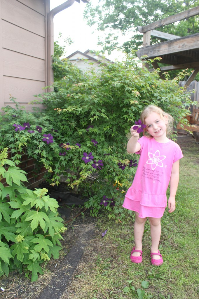 She picked dozens of blossoms off the clematis and decorated the maple tree