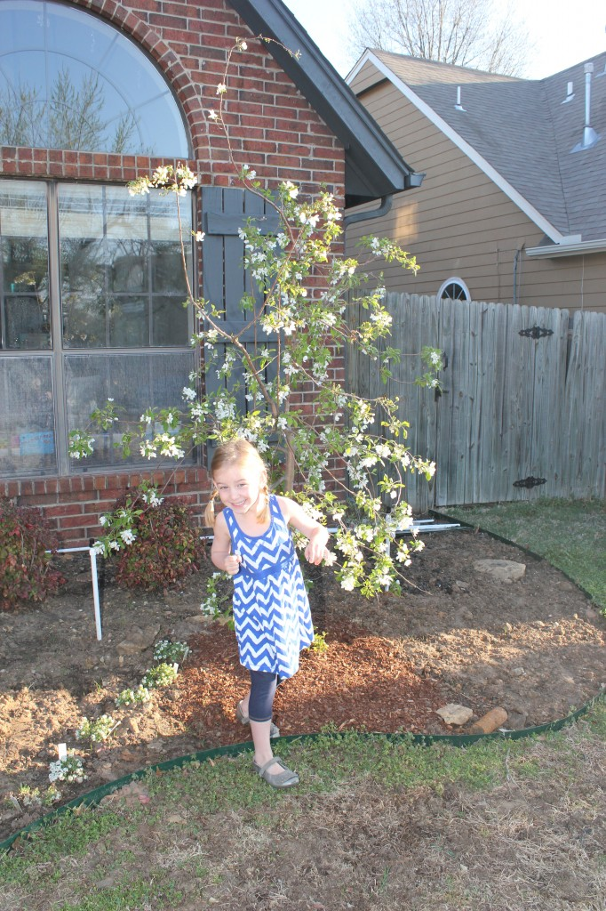 Under our new weeping, flowering crabapple tree.