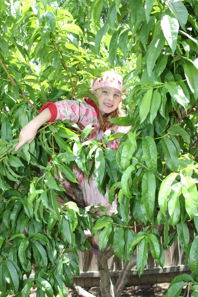 """Miss, """"I taught DZ how to  climb a tree and now he's stuck"""""""